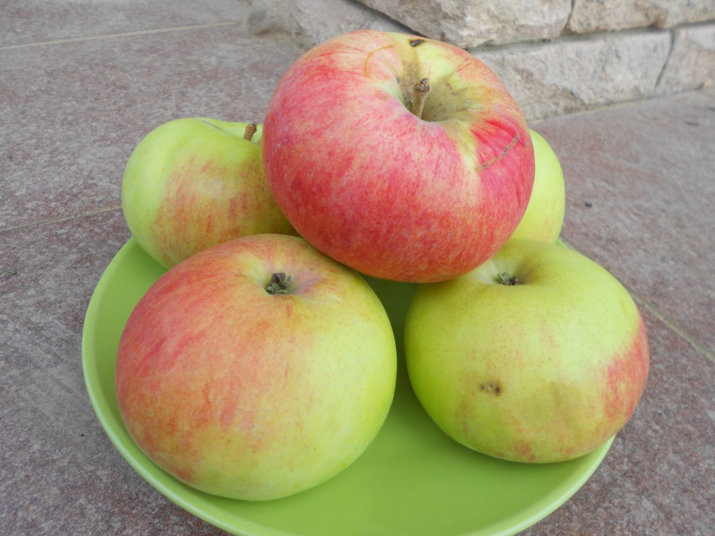 Яблоня марат бусурин описание фото